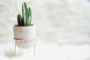 معرفی 6 گیاه دکوراتیو منزل