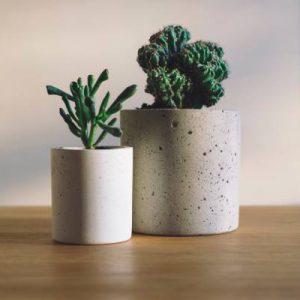 5 تاثیر مثبت گیاهان در منزل