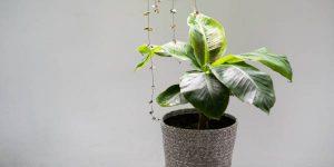 7 ایده استفاده از گلدان در دکوراسیون